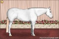 Horse Color:Buckskin Tobiano Appaloosa Rabicano