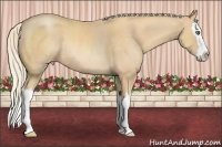 Horse Color:Gold Cream Champagne Roan Splash Rabicano
