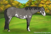 Horse Color:Grullo Roan Splash Frame Rabicano
