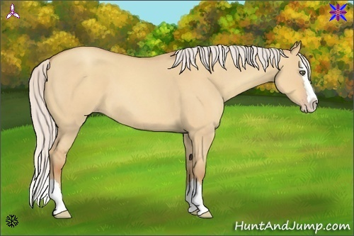 Horse Color:Silver Sable Champagne Roan Dun Splash