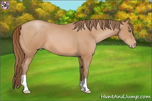 Horse Color:Bay Pearl
