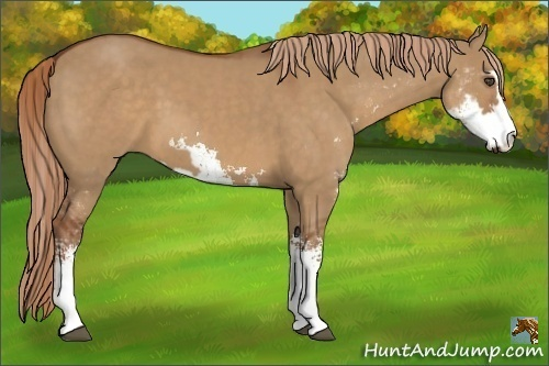 Horse Color:Red Dun Sabino Frame