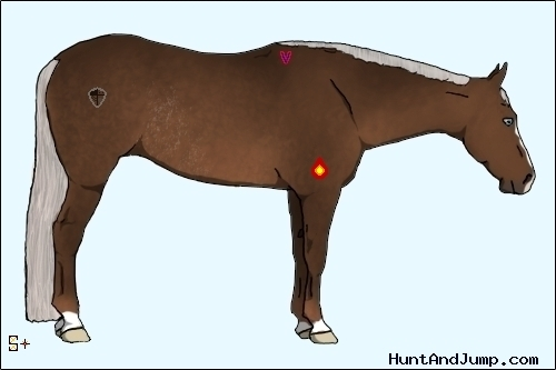 Horse Color:Chestnut Splash Rabicano