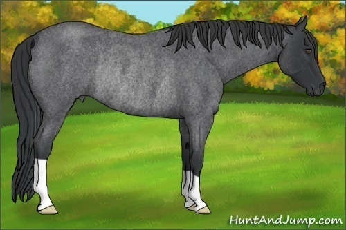 Horse Color:Blue Roan Rabicano