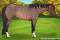 Horse Color:Bay Roan Rabicano