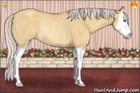 Horse Color:Silver Amber Champagne Dun Splash Rabicano