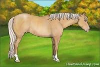 Horse Color:Silver Amber Champagne Rabicano