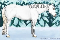 Horse Color:Gold Champagne Roan Splash Tobiano Appaloosa