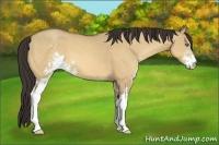 Horse Color:Amber Champagne Dun Sabino