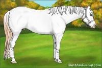 Horse Color:White Spotted Classic Cream Champagne Splash Appaloosa