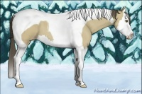 Horse Color:Classic Cream Champagne Dun Splash Tobiano