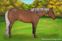 Horse Color:Silver Bay Roan