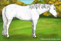 Horse Color:Silver Bay Dun Appaloosa