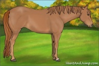Horse Color:Chestnut