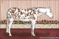 Horse Color:Chestnut Splash Appaloosa