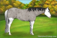Horse Color:Grullo Roan Splash