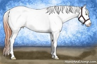 Horse Color:Amber Champagne Dun Splash Tobiano Appaloosa