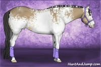 Horse Color:White Spotted Buckskin Dun