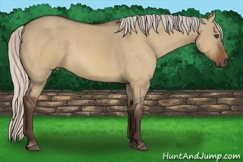Horse Color:Silver Bay Dun