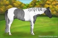 Horse Color:Blue Roan Tobiano Rabicano