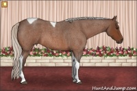 Horse Color:Silver Bay Roan Tobiano