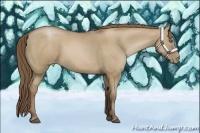 Horse Color:Grullo Pearl Rabicano