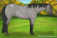 Horse Color:Smokey Grullo Roan