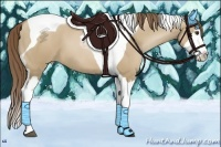 Horse Color:Grullo Pearl Splash Tobiano
