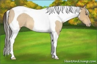 Horse Color:Amber Cream Champagne Roan Tobiano