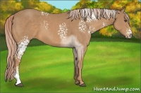 Horse Color:White Spotted Palomino