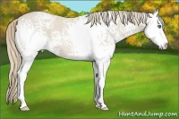 Horse Color:White Spotted Smokey Creme Sabino  Brindle