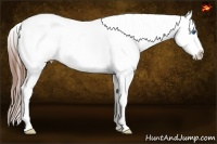 Horse Color:Bay Roan Splash Tobiano Appaloosa  Brindle