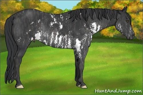Horse Color:Black Sabino Splash Rabicano  Brindle