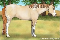 Horse Color:White Spotted Amber Champagne Pearl Splash