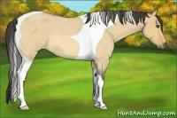 Horse Color:Buckskin Roan Dun Tobiano