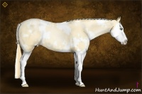 Horse Color:White Spotted Gold Champagne Pearl Dun Sabino Splash
