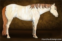 Horse Color:White Spotted Classic Champagne Pearl Dun  Brindle