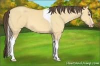 Horse Color:Amber Cream Champagne Dun Sabino Tobiano