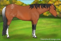 Horse Color:White Spotted Bay