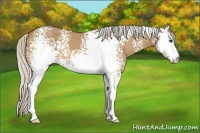 Horse Color:White Spotted Silver Bay Dun