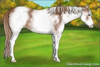 Horse Color:White Spotted Chestnut