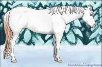 Horse Color:White Spotted Classic Champagne Dun Splash Tobiano Appaloosa Rabicano