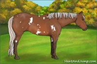 Horse Color:White Spotted Silver Bay