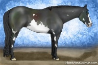 Horse Color:Black Splash Frame