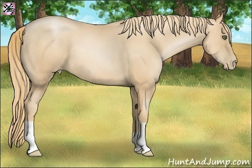 Horse Color:Gold Champagne Pearl