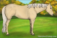 Horse Color:Palomino Frame
