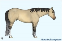 Horse Color:Buckskin Dun