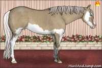 Horse Color:Silver Grullo Splash Frame