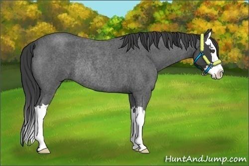 Horse Color:Smokey Blue Roan Splash Rabicano