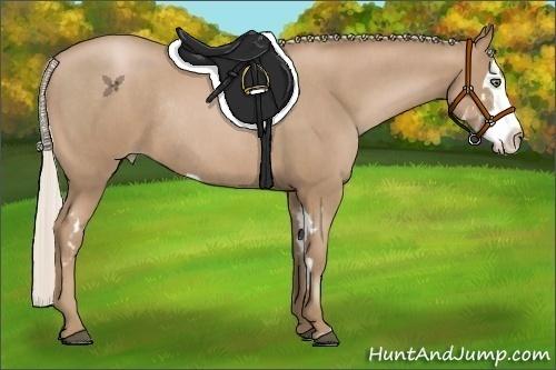 Horse Color:Silver Black Pearl Splash Frame Rabicano  Brindle